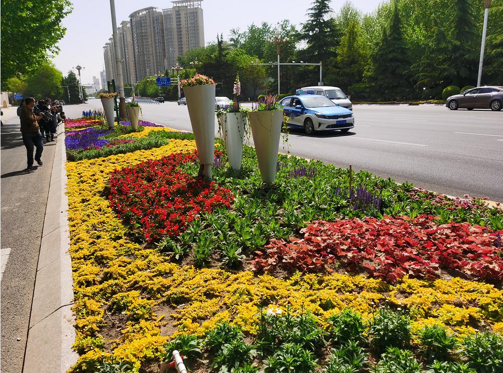 快来打卡! 河北石家庄市252万株鲜花扮靓主要街道